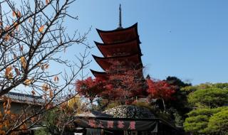 厳島神社五重塔(紅葉)